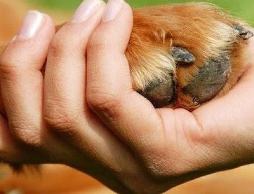 Pet-Therapy: un ringraziamento